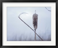 Frosted Cattails II Framed Print