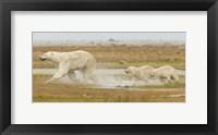 Framed White Wet Bear Run