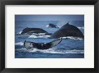 Framed Whale Tails And Humps