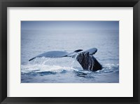 Framed Whale Tail And Sea