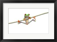 Framed Orange Footed Frog Hanging