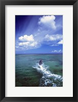 Framed Dolphin Blue Water Swim