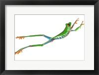 Framed Frog Leap On White II