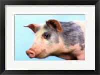 Framed Little Pig Pink And Black