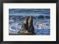 Framed Seals Singing
