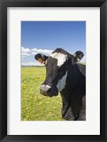Cow Tag II Framed Print