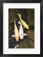 Framed Fish Trio
