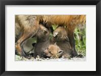 Framed Wolf Cub Trio