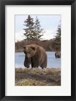 Framed Bear On The Field