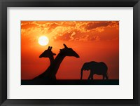Framed Giraffe Sunset Silhouette