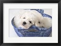Framed White Puppy In Blue Basket