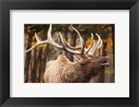 Framed Antlers In the Woods