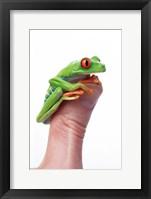 Framed Green Frog On Thumb