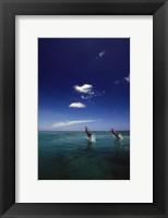 Framed Dolphin Blue Water Swim Duo
