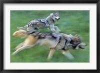Framed Running Wolves Green Field