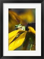 Framed Frog Found