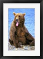 Framed Bear On The Rocks