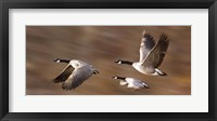 Framed Flying Geese Trio