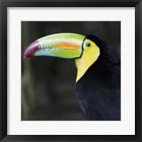 Framed Toucan Profile