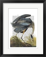 Blue Heron 1 Framed Print
