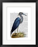 Blue Heron 2 Framed Print