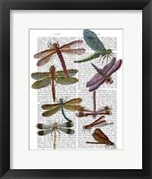 Dragonfly Print 3 Framed Print