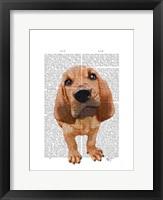 Framed Bloodhound Puppy