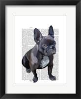 Framed French Bulldog Plain