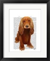 Cocker Spaniel Plain Framed Print