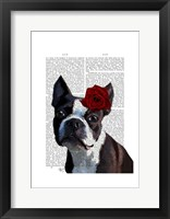 Framed Boston Terrier with Rose on Head