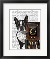 Framed Boston Terrier Photographer