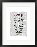 Italian Carnation 6 Framed Print