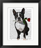 Framed Boston Terrier with Rose in Mouth
