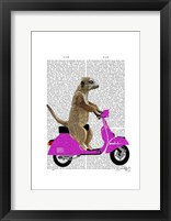 Meerkat on Pink Moped Framed Print