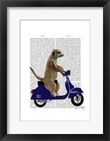 Meerkat on Dark Blue Moped Framed Print