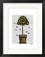Lemon Tree Framed Print