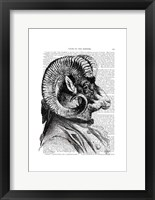 Bighorn Sheep In Suit Framed Print