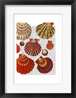 Framed Red Clam Shells