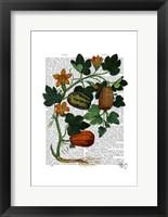 Squash Vine 1 Framed Print