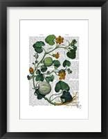 Squash Vine 2 Framed Print