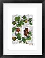 Squash Vine 3 Framed Print