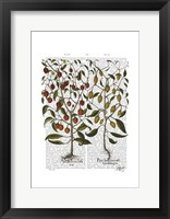 Peppers 1 Framed Print