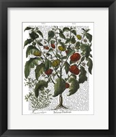 Peppers 2 Framed Print