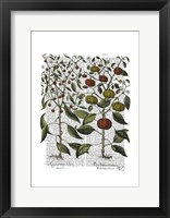 Peppers 4 Framed Print