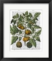 Peppers 5 Framed Print