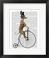 Greyhound on Black Penny Farthing Bike Framed Print