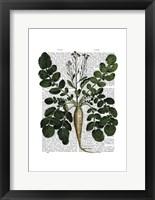 Parsnip 3 Framed Print