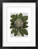 Cauliflower Framed Print