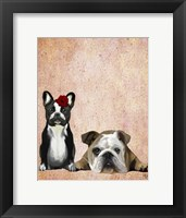 Framed French Bulldog and English Bulldog