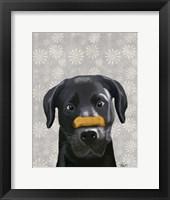 Black Labrador With Bone on Nose Framed Print